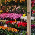 Estado esclarece decreto e diz que papelarias, livrarias e floriculturas só podem funcionar por telentrega