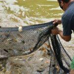 Piscicultores de Lomba Grande oferecem pescado direto nas propriedades ou por tele-entrega