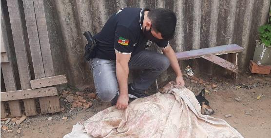 Vídeo: Após matar uma cadela a chutes, homem de 22 anos é indiciado pela delegada Tatiana Bastos da 4ª DP de Canoas