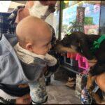 SEMPA promove neste sábado mais um Espaço de Adoção de Cães na Praça Tiradentes